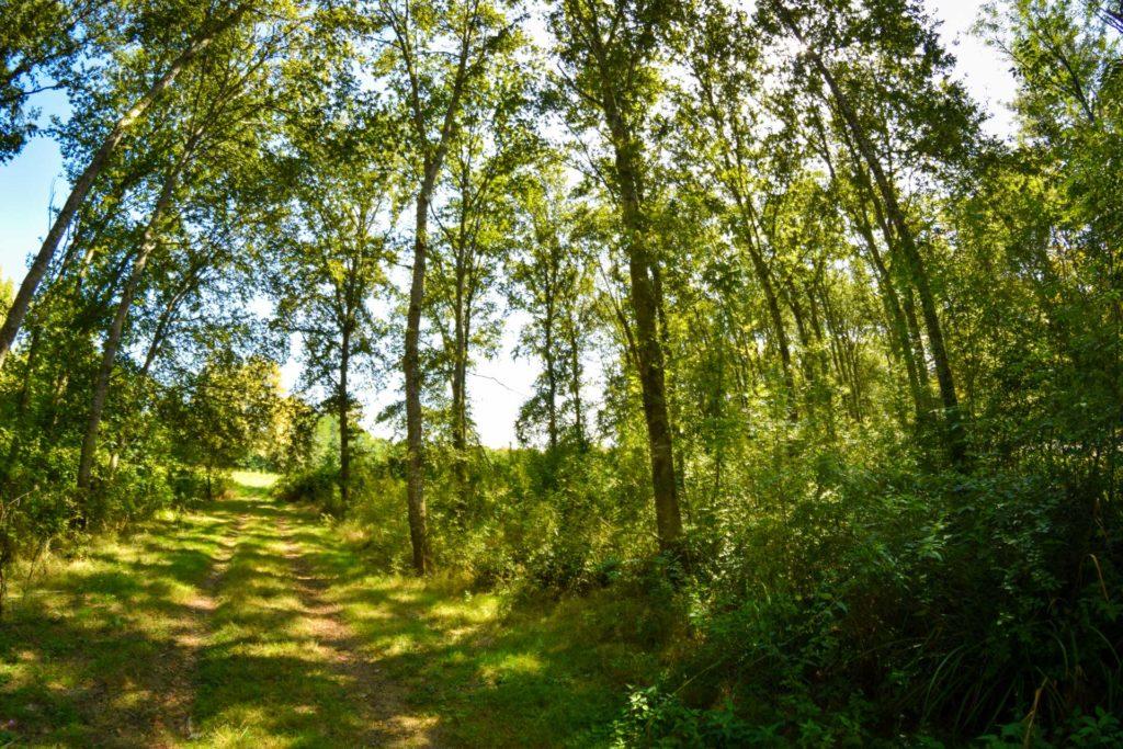 Forêt à Seyresse dans les Landes