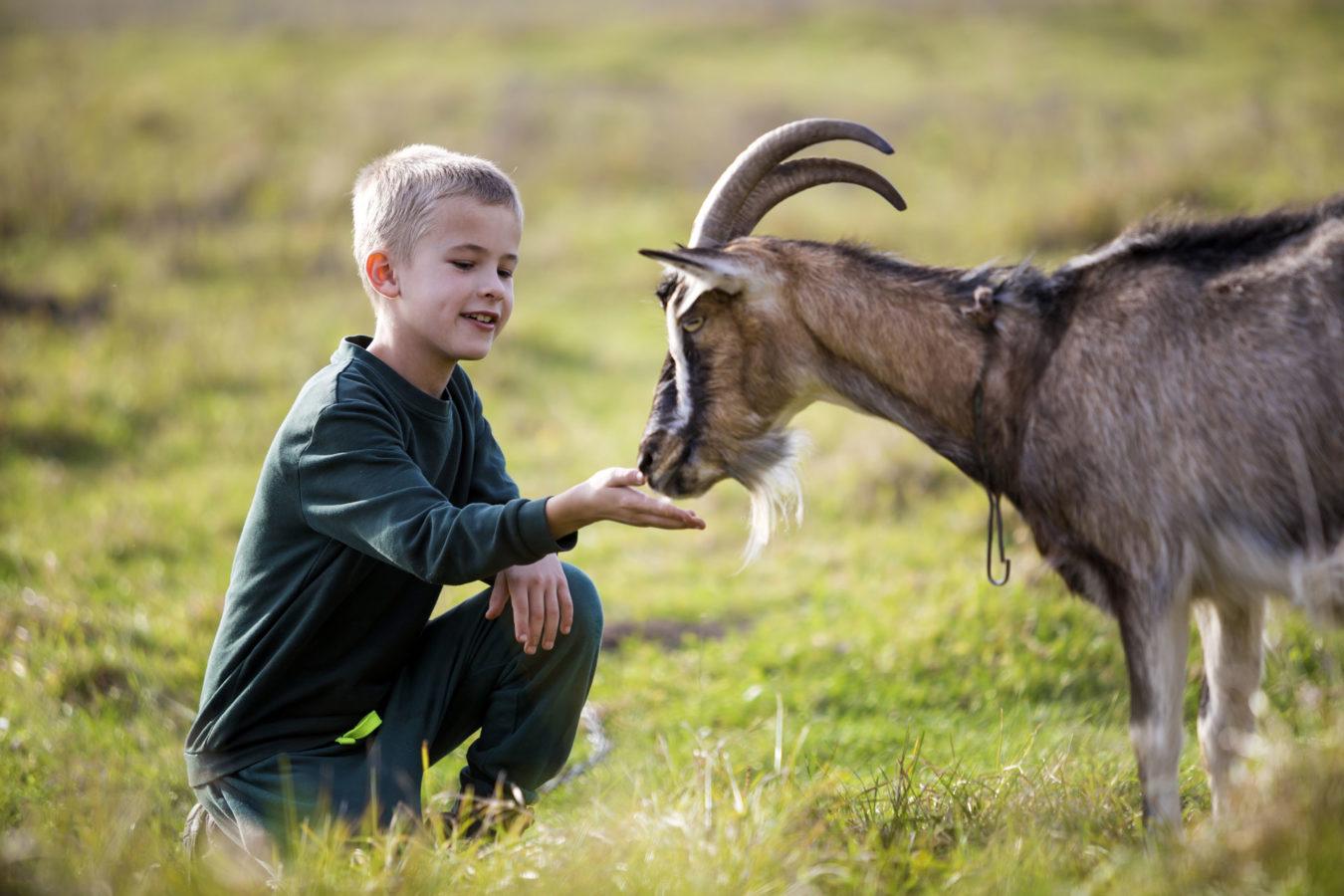 enfant avec chèvre